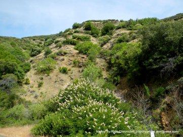 Mount Vaca