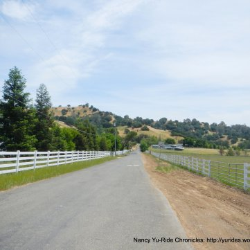 Cantelow Rd-white fence lined road