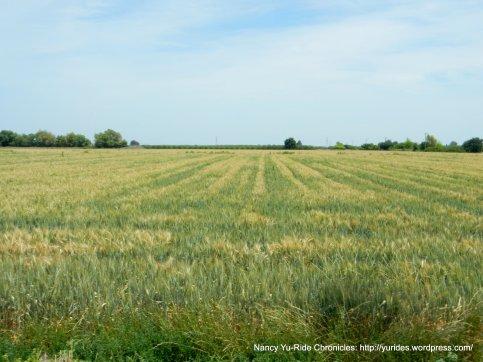fertile fields