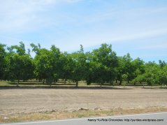 orchards on Sievers Rd