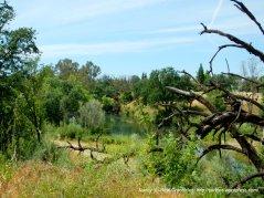 glimpse of Putah Creek