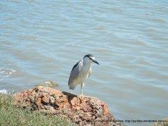 bay wildlife