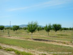 new growth orchards