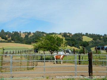 horse ranches