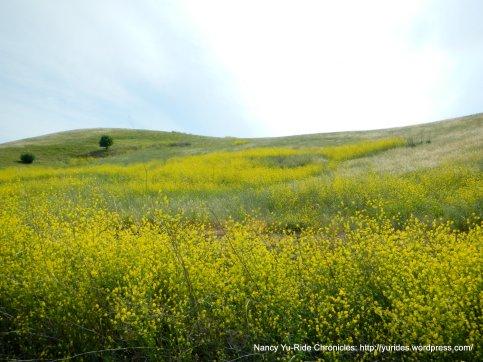 vibrant yellows