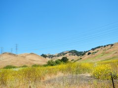 Pinole Hills wildflowers