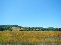 meadow wildflowers