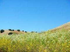 valley wildflowers