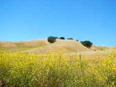 Pinole Hills wildflowers