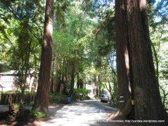 Cascade Dr-redwood forest