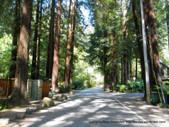 Cascade Dr-redwood forest