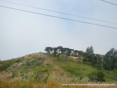 edge of Muir Woods