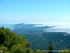Marin views