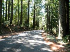 Ridgecrest Blvd-redwoods