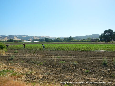agricultural farmlands