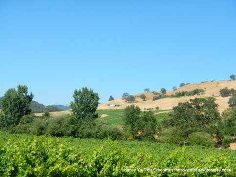 valley-hillside vineyards