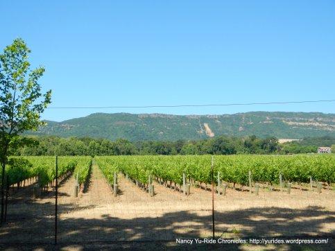 Altamura Winery/Vineyards