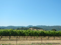 Wooden Valley vineyards