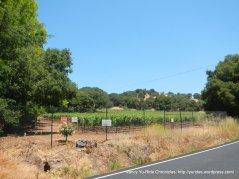 Jarvis Winery Vineyard