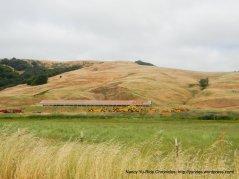 Chileno Valley Rd ranch