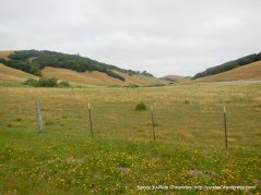 Chileno Valley meadows