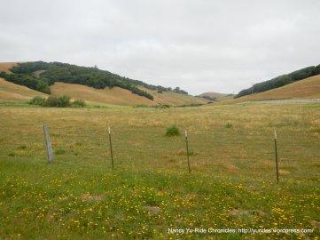 Chileno Valley meadows