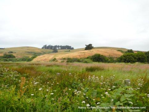 bay landscape