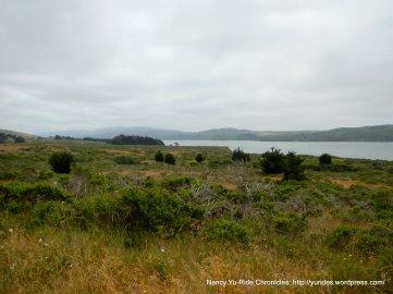 Tomales Bay view