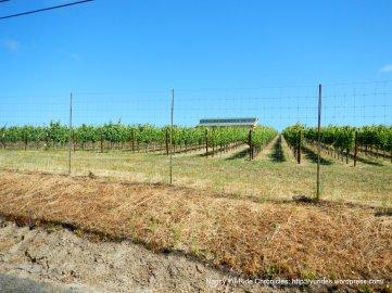 Spring Hill Rd vineyard