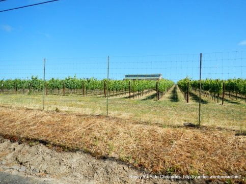 Spring Hill Rd vineyard