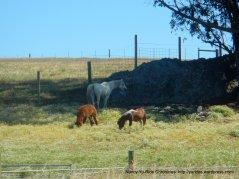 grazing animals