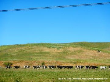 dairy run