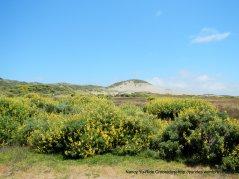 coastal meadow flowers