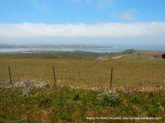 coastal meadows