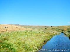 Estero San Anotnio