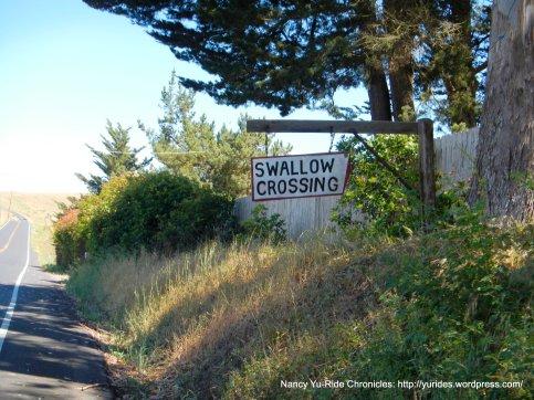 swallow crossing