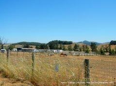 horse ranch
