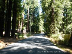 Joy Rd-redwoods