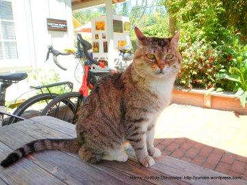 Gold Coast Bakery cat
