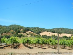 Franklin Canyon Rd vineyard