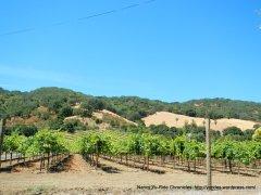 Franklin Canyon Rd vineyard