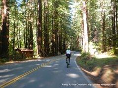 thru the redwoods
