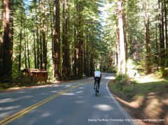 thru the redwoods