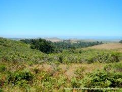 Pt Reyes National Seashore landscape