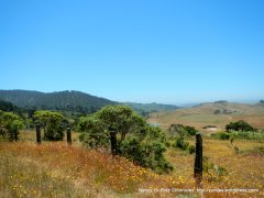 Pt Reyes National Seashore landscape