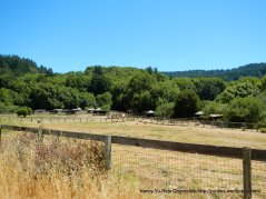 Lucas Valley horse ranch