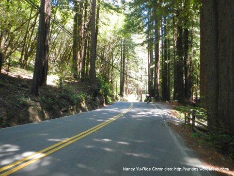 Lucas Valley-thru the redwoods