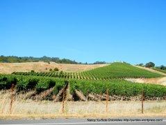 hillsdie vineyards
