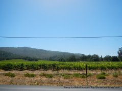 Sonoma Valley vineyard