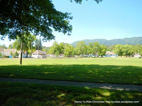 green lawn